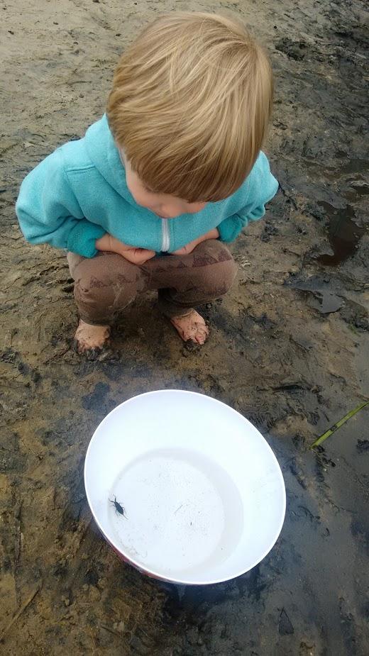 Waterbeestjes zoeken